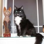 Her Royal Gato-ness