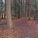 Sawdust Trail